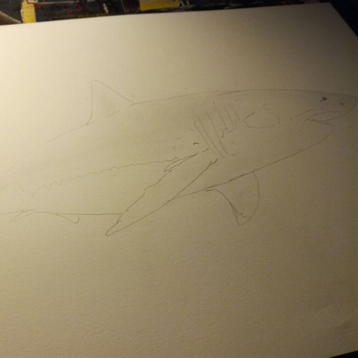 6th drawing Working on a new shark #art #artist #animal #fineart  #shark #requin #pencil #drawing