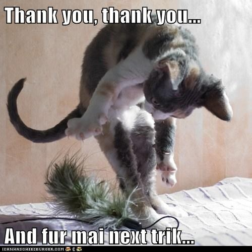 Funny Memes To Say Thank You : Thank you lolcats thanks pinterest cats