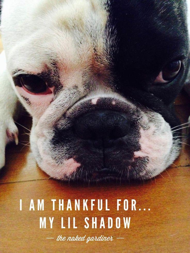 Join Kathy Gardiner, The Naked Gardiner as she celebrates in the act of gratitude with the world each Thursday for Thankful Thursdays.