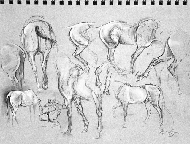 163 best ló images on Pinterest | Animal anatomy, Drawings of horses ...
