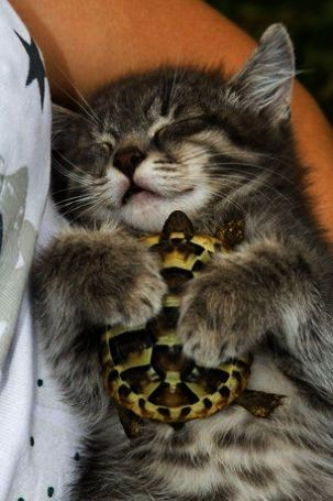 Neat Top 10 Cute Cats Breeds Facebook Cutest Cats And Kittens