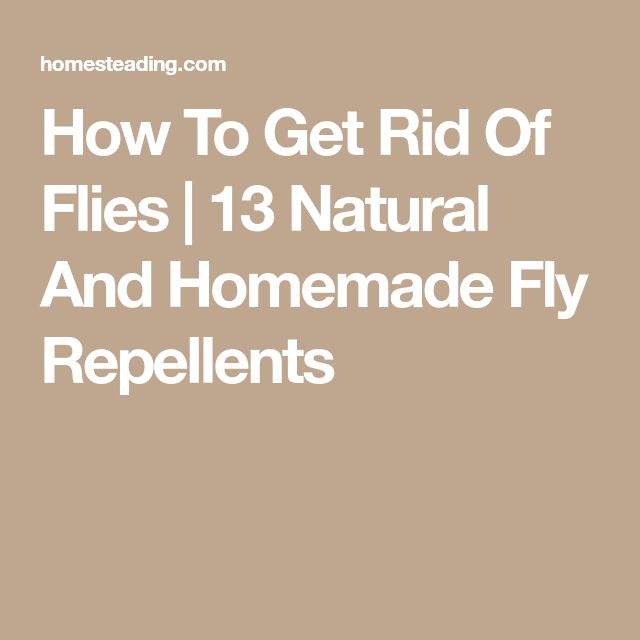 How To Get Rid Of Flies | 13 Natural And Homemade Fly Repellents