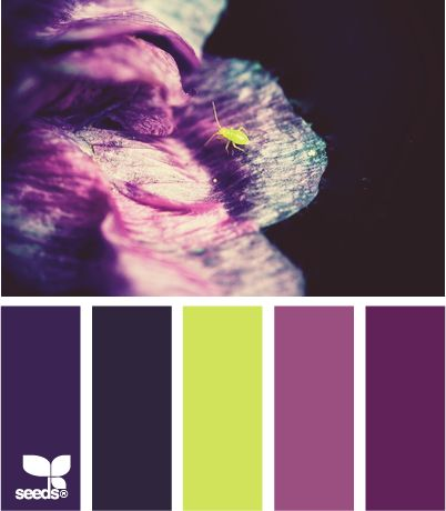 color crawlLimes And Purple Colors, Colors Crawl, Bedroom Colors, Purple And Teal Colors Schemes, Seeds Colours, Colors Palettes, Dark Purple Room Ideas, Colors Schemes Teal, Design Seeds Com
