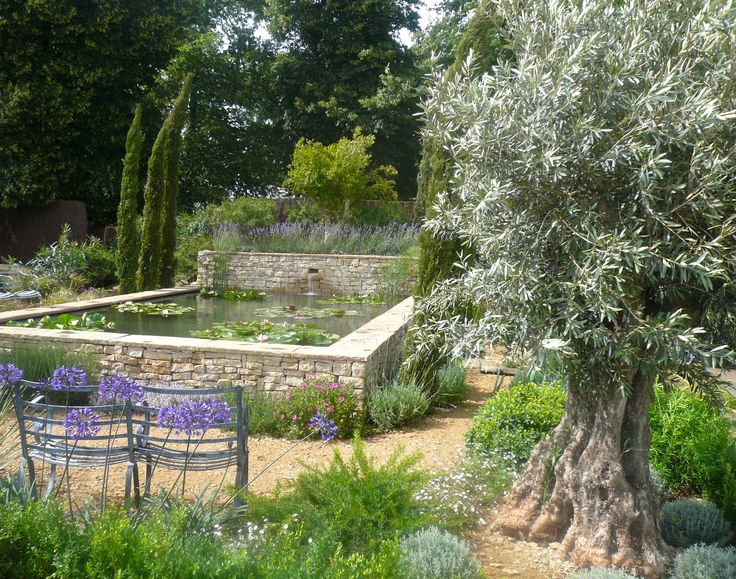 Old olive tree with mediterranean planting and raised pond for Garden pool facebook