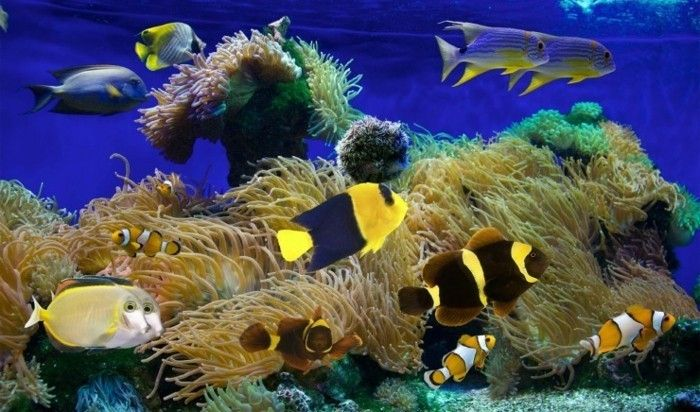 aquarium fur kleine exotische meeresfische korallen aquarium gestaltung aquarium deko
