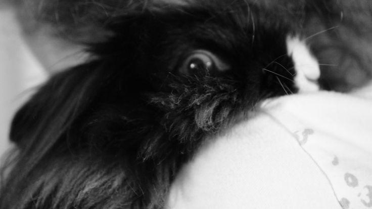 Voici Pépinne ma lapine Photo prise par Alexia Bélisle