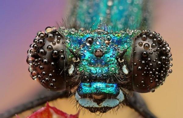 Insectos en Primer plano