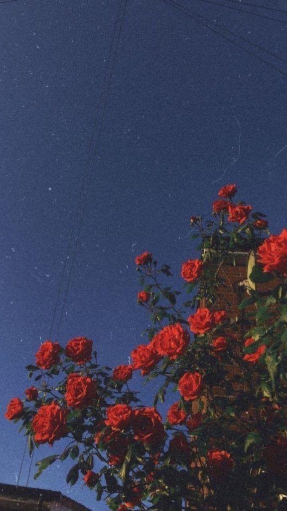 11 Beautiful Sunflower Wallpaper For Iphone Com Imagens Papel