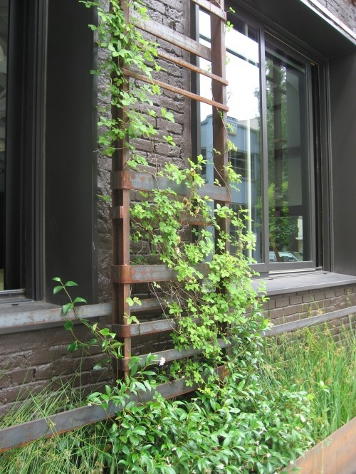 Old ladder used as a trellis for climbing plants