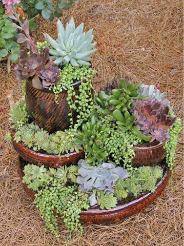 17 best images about creative planters on pinterest gardens container gardening and cement - How to make a succulent container garden ...