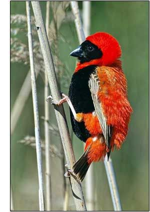 Intaka Island Bird Sanctuary, Cape Town, South Africa