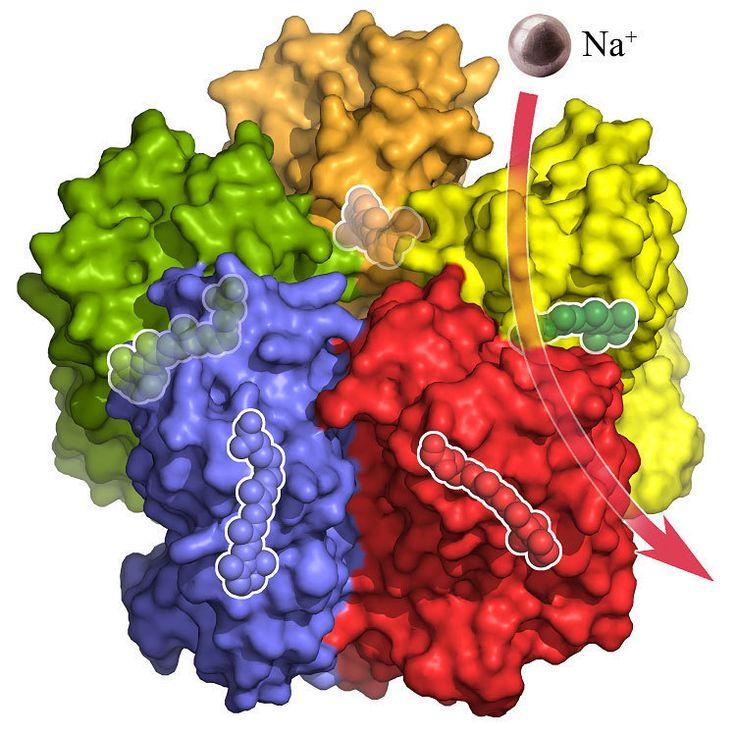 952 best Cell \ Molecular Biology images on Pinterest Molecular - new blueprint gene expression