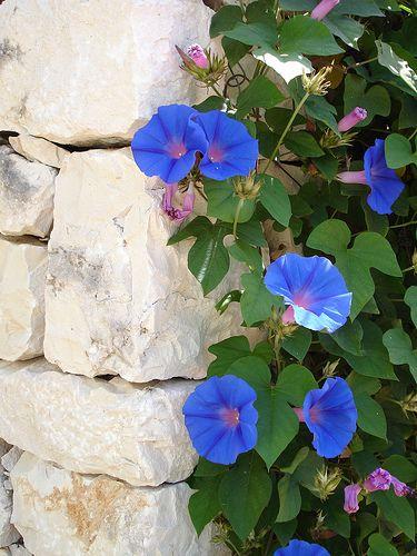 Inspiratie voor de blauwe tuin.
