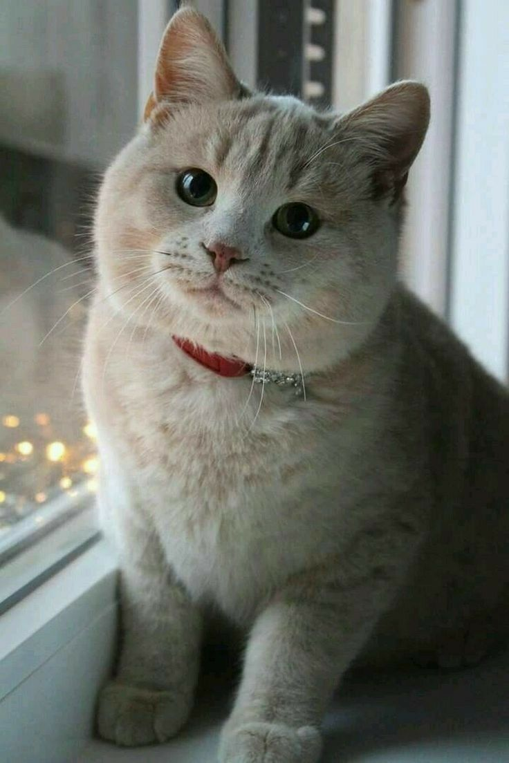 Such A Sweet Face With Images Cute Cats Cute Animals Pretty Cats