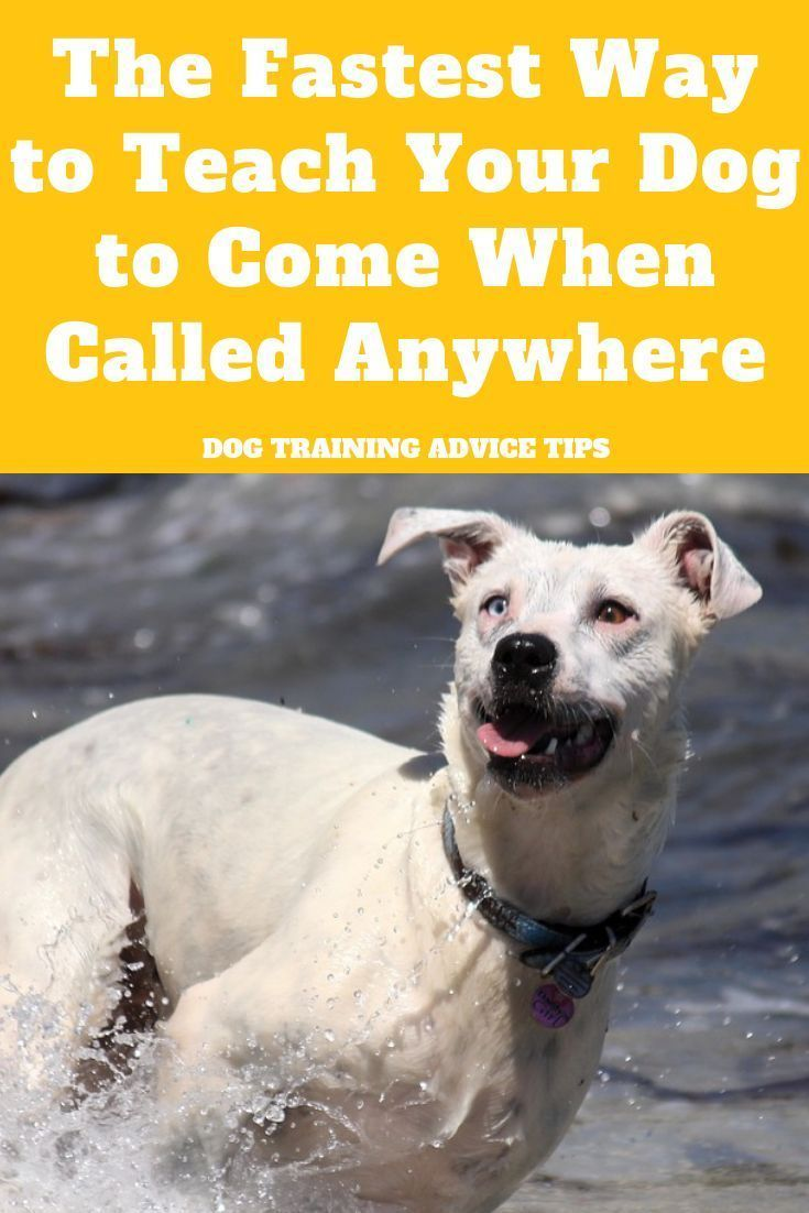 The Fastest Way To Teach Your Dog To Come When Called Anywhere In 2020 With Images Dog Training Dog Training Advice Dog Recall
