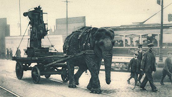 An elephant during World War I pulls ammunition in Sheffield, UK. #war #worldwarone #history
