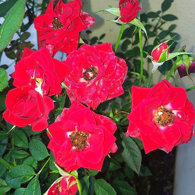 I think I don't need a caption for this 😉🌼#gardentherapy #gardenactivist #gardeninggoals #potd #sharegoodness #pursuepretty #charminghome #inspireothers #growsomethinggreen #growyourown #flowersmagic #flowerborders🌸 #flowerloversdaily #raisedgardenbeds Spot this pretty little pink #flowers amongst my #strawberry plants ! #gardeningisfun #organicgardening #sowlovereaplove #epicgarden #mygardenflowers #iphoneshot #nofilterneededforthisbeauty #calmmonday #loveflowers #birdwatching…