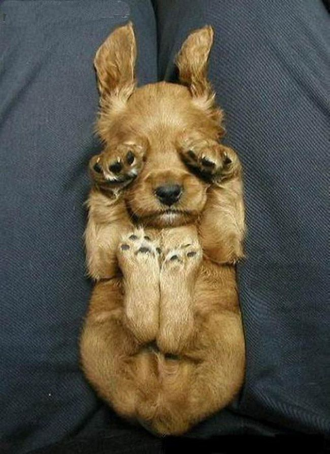 visit www.amazingdogtales.com for the best funny dog joke pics,inspirational dog stories and dog news.... Funny Puppies - 32 Pictures