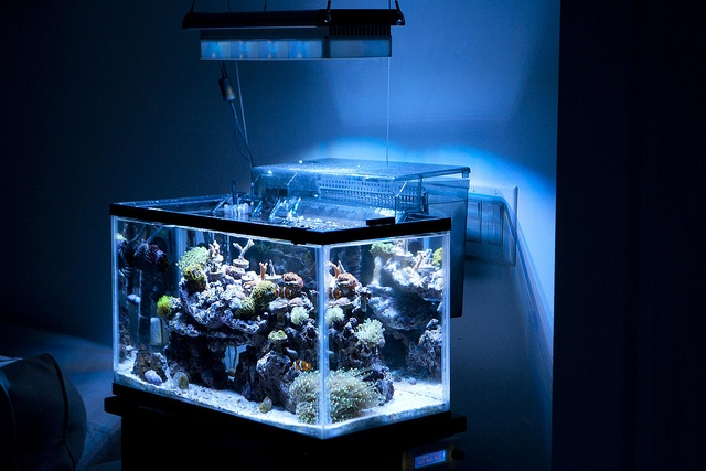 10 gallon by tehfuzzman on nano reef aquariums for Saltwater fish for 10 gallon tank