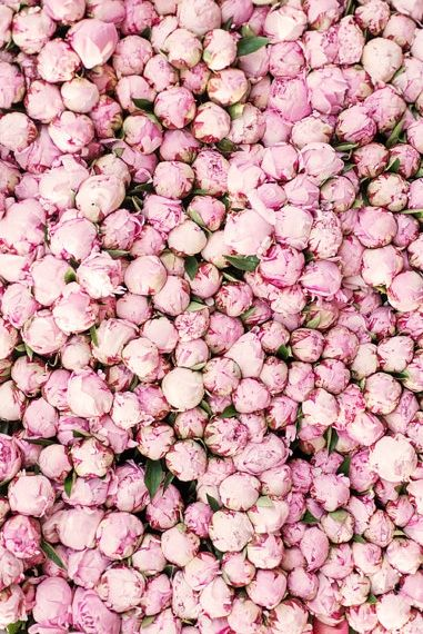 Pretty peonies in Paris.