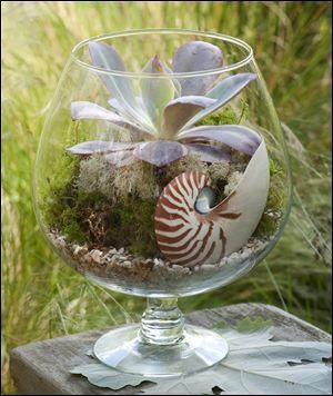 """Terrariums today can be open, allowing for air to flow freely, and they incorporate unusual living and non-living components."""