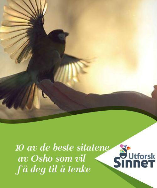 10 av de beste sitatene av Osho som vil få deg til å tenke   Osho snakker om kjærlighet, samvittighet og personlig vekst. Sitatene av Osho er en sann gave for alle som ønsker å reflektere og gå enda dypere.