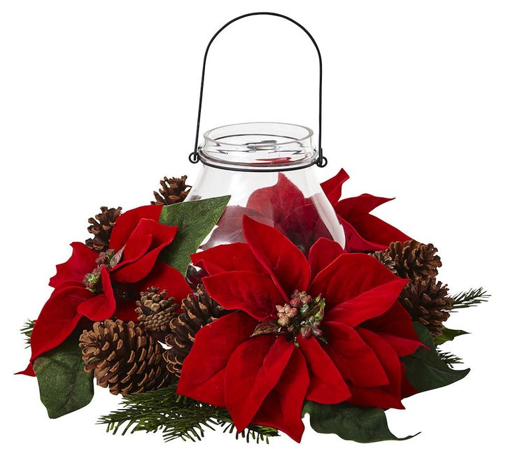 how to make a poinsettia change color