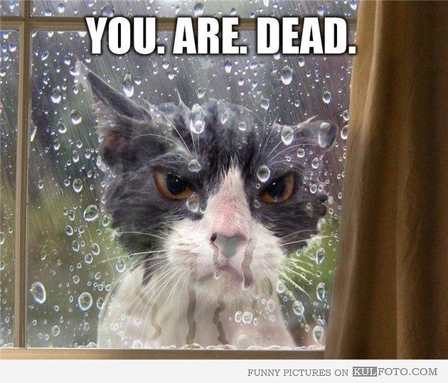 Cat left outside in the rain accidentally..lol