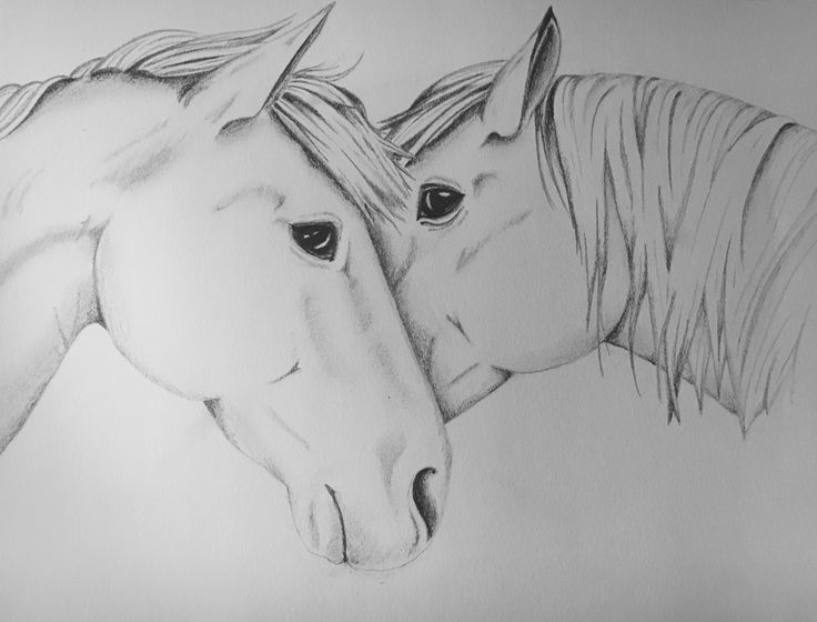 Mustangs - Charcoal Pencil