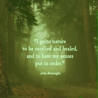 quotes about nature and life - Google Search