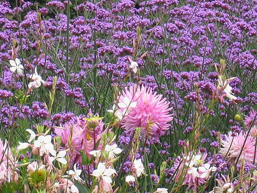 Beautiful complementary colours scheme for meadow planting plan