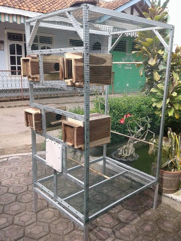 Contoh Kandang Koloni Ternak Lovebird sederhana | Rumah ...