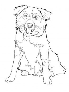 Border Collie Coloring Page From Dogs Category Select 27237 Printable Crafts Of Cartoons Nature Animals Bible And Many More