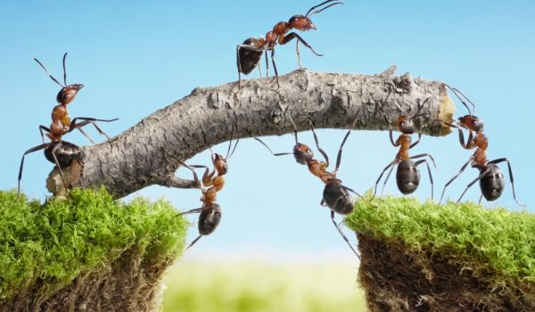 Съвети, въпроси и отговори за What Does it Mean if you Have a Lot of Ants in the Home? Информация за Ants, Ants in the Home, Meaning of Ants, Superstitions about Ants