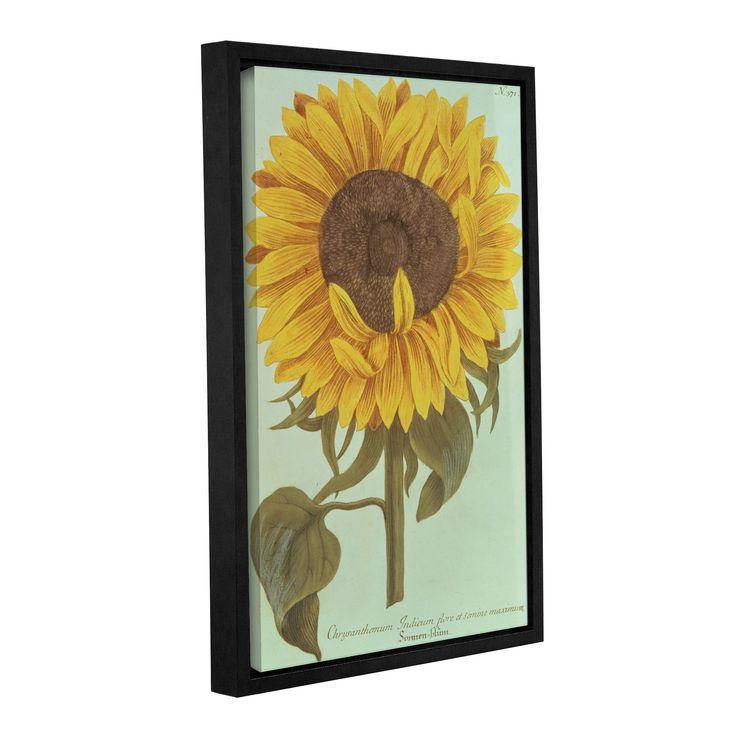 ArtWall JW Weinmann's Chrysanthemum Indicum flore et Semine maximum, Gallery Wrapped Floater-framed Canvas