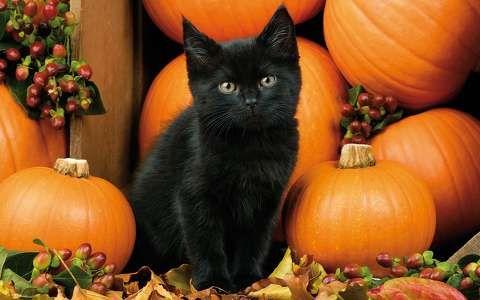 macska tök állatkölyök ősz