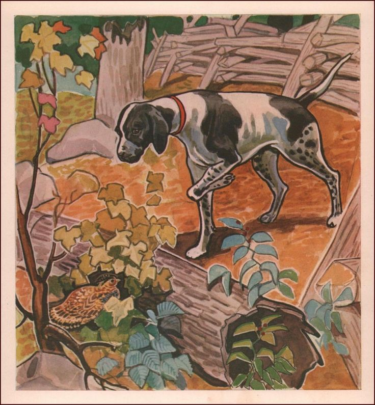 POINTER DOG Bird Hunting, Vintage Print, Authentic 1941 in Art, Art from Dealers & Resellers, Prints | eBay