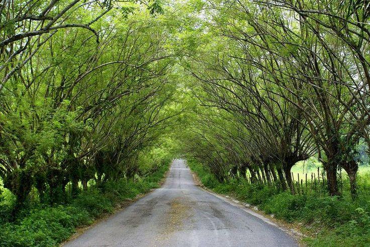 Camino a Tambaque, San Luis Potosi