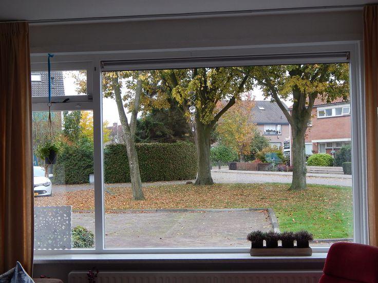 Ons uitzicht in de herfst: prachtig die grote lindebomen voor het huis :-)