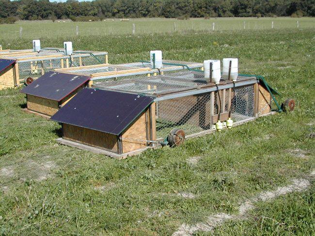 élevage de lapins en cages mobiles sur prairie
