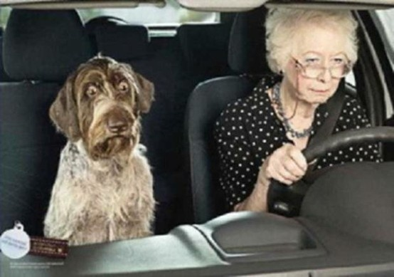 ": How do you know when it is time to ""hang up the car keys""? I WOULD SAY WHEN YOUR DOG HAS THIS LOOK ON HIS FACE!"