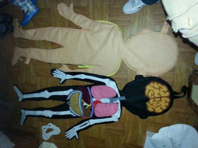 Cuerpo humano órganos