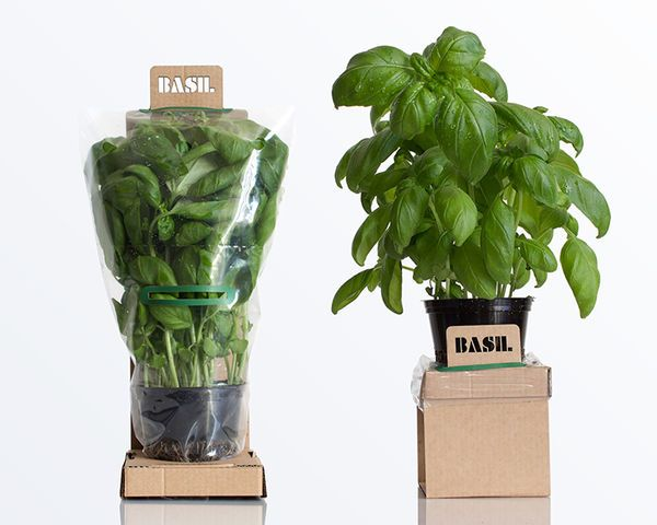 With this new packaging design for herbs, consumers can buy the plants from the store and keep using the food for weeks instead of having the purchase die after only a few days.