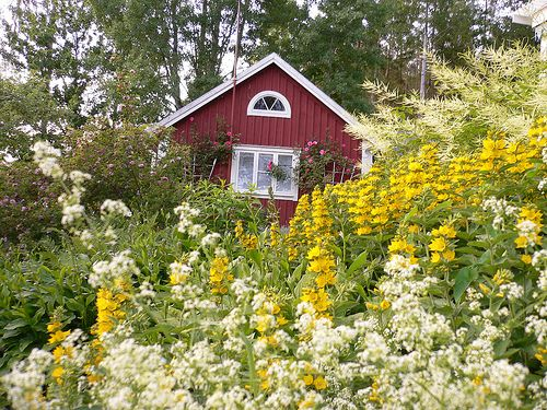 012 In the flower garden Småland, Sweden: Gardens Ideas, Flowers Gardens, Gardens Style, Blue Flowers, Gardens Småland, Flower Gardens, Extended Families, Photo, Swedish Gardens