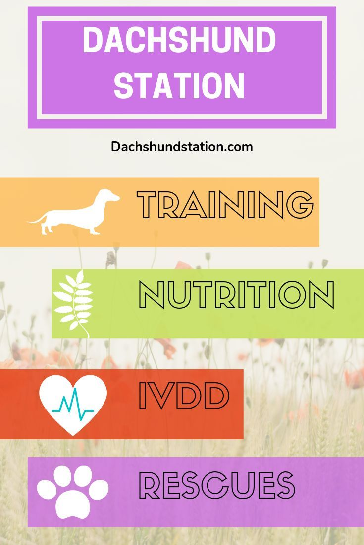 Check Out Dachshund Station For All Your Dachshund Needs
