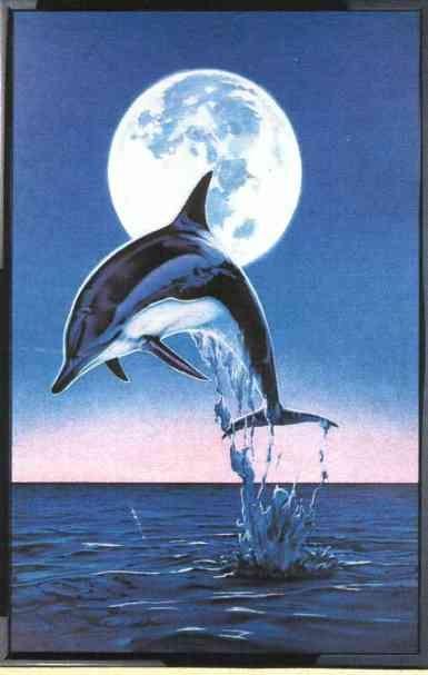 253 Best Orca Dolphins Whale Baloega Orka Dolfijnen