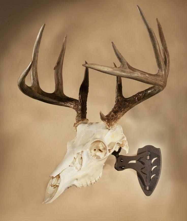 23 best elk mounts ideas images on Pinterest | Deer antlers, Deer ...
