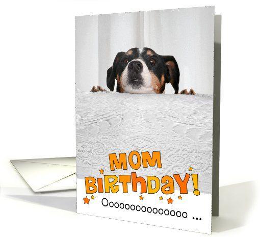 33 best A ka images – Photographer Birthday Card