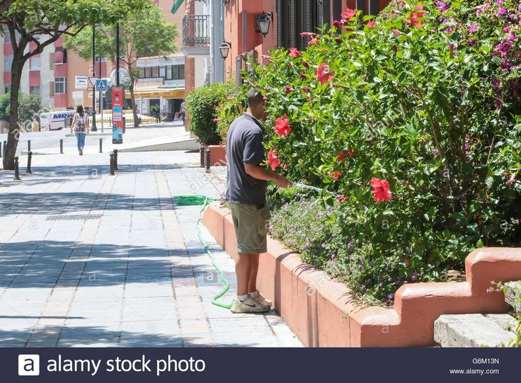Download this stock image: Young man watering plants - G6M13N from Alamy's library of millions of high resolution stock photos, illustrations and vectors.