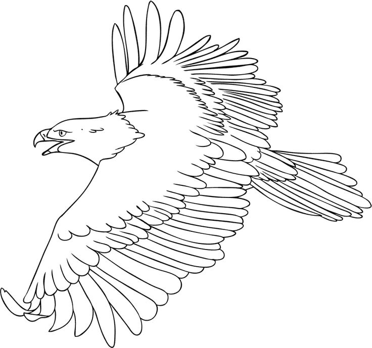 Bald Eagle coloring printable